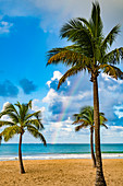 Atlantic, palm trees with rainbow, San Juan, Puerto Rico, Caribbean, USA