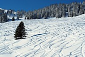 Skiing near Kitzbühel, Winter in Tyrol, Austria
