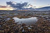 Typische steinige Landschaft im Norden von Island bei Sonnenuntergang, Europa
