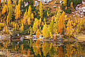 Wooded banks of Lake Federa in Autumn, Cortina d'Ampezzo, Belluno, South Tyrol, Italy, Europe