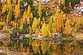 Bewaldetes Ufer des Sees Lago Federa im Herbst, Cortina d'Ampezzo, Belluno, Südtirol, Italien, Europa