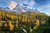 Autumn forest near Cadini di Misurina, Auronzo di Cador in the Dolomites, Belluno, South Tyrol, Italy, Europe