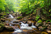River Ilse in Ilse valley in the Harz mountains, Saxony-Anhalt, Germany, Europe