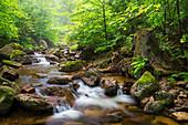 Der Fluss Ilse im Ilsetal im sächsischen Harz, Sachsen-Anhalt, Deutschland, Europa