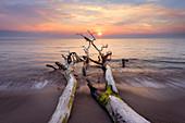 Sommerliche Abendstimmung, Treibholz am Strand der Ostsee, Mecklenburg-Vorpommern, Deutschland, Europa