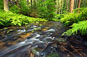 River running through the Khaa valley near Kirnitzsch, Bohemian Switzerland, Elbe Sandstone Mountains, Germany, Europe