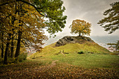 Linden tree at so called Calverbuehl hill, Dettingen at Erms river, Swabian Alb, Baden-Wuerttemberg, Germany