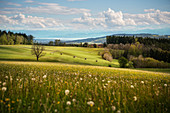 View from Hoechsten Mountain across Lake Constance towards the Alps, Baden-Wuerttemberg, Germany