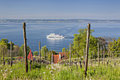 Vineyard in Meersburg on lake Constance, Meersburg,  Baden, Baden-Wuerttemberg, South Germany, Germany, Central Europe, Europe