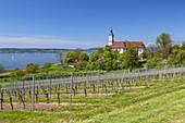 Weinberge und Zisterzienser Priorat Kloster Birnau am Bodensee, Uhldingen-Mühlhofen, Baden, Baden-Württemberg, Süddeutschland, Deutschland, Europa