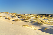 Dune landscape on the North Frisian Island Amrum, Nebel, North Sea, Schleswig-Holstein, Northern Germany, Germany, Europe