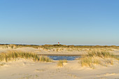 Lighthouse in the dunes on the North Frisian Island Amrum, Norddorf, North Sea, Schleswig-Holstein, Northern Germany, Germany, Europe