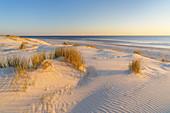 Dune landscape on the North Frisian Island Amrum, Norddorf, North Sea, Schleswig-Holstein, Northern Germany, Germany, Europe