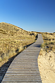 Wodden path in the dunes of the North Frisian Island Amrum, Norddorf, North Sea, Schleswig-Holstein, Northern Germany, Germany, Europe