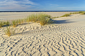 Dunes at the beach on the East Frisian Island Norderney, North Sea, Lower Saxony, Northern Germany, Germany, Europe