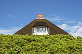 Thatched house in Hörnum, North Frisian Island Sylt, North Sea coast, Schleswig-Holstein, Northern Germany, Germany, Europe