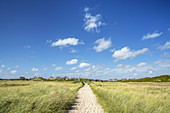 Path in the dunes in Hörnum, North Frisian Island Sylt, North Sea coast, Schleswig-Holstein, Northern Germany, Germany, Europe