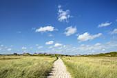 Weg durch die Dünen nach Hörnum, Insel Sylt, Nordfriesland, Schleswig-Holstein, Norddeutschland, Deutschland, Europa