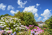 Thatched house with flower garden in Westerland, North Frisian Island Sylt, North Sea coast, Schleswig-Holstein, Northern Germany, Germany, Europe