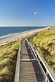 Way through the dunes to the beach in Wenningstedt, North Frisian Island Sylt, North Sea coast, Schleswig-Holstein, Northern Germany, Germany, Europe