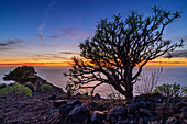 Sweet tabaiba bush at sunset from La Merica with view to island El Hierro, Euphorbia balsamifera, La Merica, La Gomera, Canary Islands, Canaries, Spain