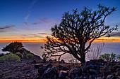 Balsam-Wolfsmilch bei Sonnenuntergang von La Merica mit Blick auf El Hierro, Euphorbia balsamifera, La Merica, La Gomera, Kanarische Inseln, Kanaren, Spanien