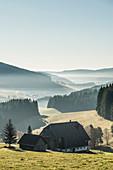 Morgennebel im Herbst, Jostal, bei Neustadt, Schwarzwald, Baden-Württemberg, Deutschland