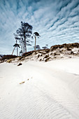 Sand Dune, Tree, Weststrand, Fischland-Darß-Zingst, Mecklenburg-Vorpommern, Germany, Europe