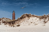 Lighthouse Darßer Ort, Sand Dune, Seagull, Weststrand, Fischland-Darß-Zingst, Mecklenburg-Vorpommern, Germany, Europe