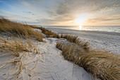 Sunset, Sand Dune, Marram Grass, Weststrand, Fischland-Darß-Zingst, Mecklenburg-Vorpommern, Germany, Europe