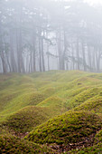 Misty woodland with grass mounds and trees in the background.