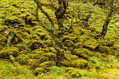 Moss and trees, Inverpolly Nature Reserve, Highlands, Scotland, UK