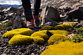A man with red hiking boots in front of yellow moss, Los Glaciares National Park, Patagonia, Argentina