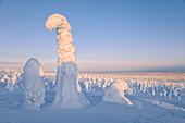 Gefrorener Baum, genannt Tykky, in den verschneiten Wäldern im Riisitunturi-Nationalpark, Lappland, Finnland