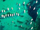 Detail of Ionic sea aerial view, Taranto district, Puglia, Italy, Europe.