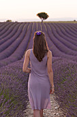 Brunette woman in purple dress in a lavender field at sunset, valensole, provence, france