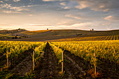 Weinberge in der Nähe von Castellina in Chianti, Toskana, Italien