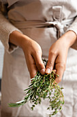 Hands of young woman holding rosemary