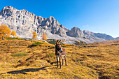 Donkey in autumn on the pasture of the Santa Maria valley in Natural Park Adamello Brenta