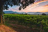 Summer season in Franciacorta, Lombardy district, Brescia province, Italy, Europe.
