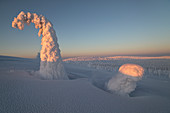 Frozen trees of Riisitunturi hill, Riisitunturi national park, posio, lapland, finland, europe.