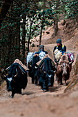 Asia, Nepal, Himalaya region, Sagarmatha, Namche Bazar, Everest Base Camp Trekking