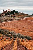 Chianti-Region, Toskana, Italien, Weinberge im Herbst bei Sonnenuntergang
