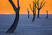 The eeriness of the acacia trees of Deadvlei,Namib Naukluft national park,Namibia,Africa
