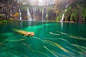 Plitvice at autumn, Plitvicka jezera National Park, Lika and Segna region, Karlovac region, Croatia, Eastern Europe