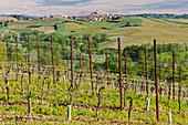 Monferrato, Asti district, Piedmont, Italy. Landscapes of the Monferrato wine region, on the Grana village background