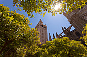 La Giralda bell tower and Seville Cathedral from orange court, Seville, province of Seville, Andalusia, Spain