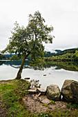 Lac Longemer, Xonrupt-Longemer, Département Haut-Rhin, Vogesen, Frankreich