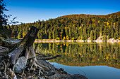 Forest, trees are reflected in the blue water in autumn, Lac Vert, near Soultzeren, Département Haut-Rhin, Vosges, France