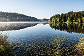 Morning mood with ground fog, Windgfällweiher, at Titisee, Black Forest, Baden-Wurttemberg, Germany